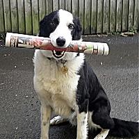 dog200